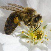 Unsere Bienen sind in Gefahr