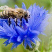 Ein Garten für die Bienen