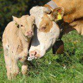 VN vergeben Tierschutzpreis