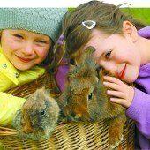 Die VN wünschen allen Lesern ein schönes Osterfest!