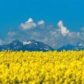 Landwirtschaftskammer fürchtet Verlust von Böden