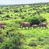 Elefantenflüsterer und Krüger Nationalpark