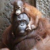 Auf Mamas Schultern