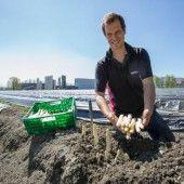 Bodenheizung für Spargelfeld