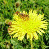 Die Varroa-Milbe bleibt uns