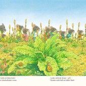 Kazuo Iwamura, der japanische Kinderbuchillustrator, achtet auf das Detail und hegt seine Liebe zur Natur. Demnächst ist er im Medienhaus