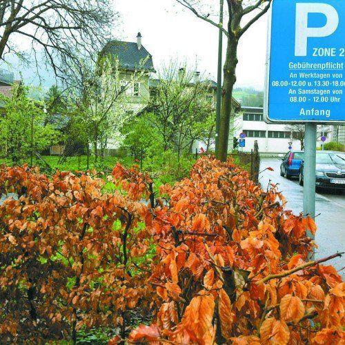 Für viele ist der 600 m² große Garten beim Kalb-Haus ein Kleinod.    Foto: Verein Edmund Kalb