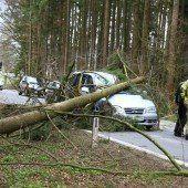 Elf Tote und Verwüstung durch Sturmtief Niklas