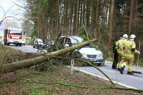 In Michaelbeuren (Salzburg) stürzte ein Baum auf ein Auto. APA