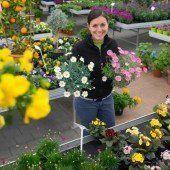 Der Frühling zieht in die Gärten ein