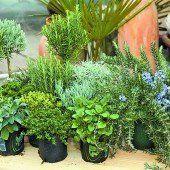 Frische Kräuter aus dem eigenen Garten