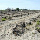 Mehr Dürren und Fluten durch den Klimawandel