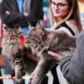 Katzen auf dem Catwalk