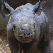 Fototermin im Magdeburger Zoo