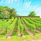 Köstliche Weine im Loiretal