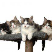 Bezaubernde Katzenschönheiten