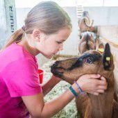 Das Mitmachen ist der größte Dienst am Tierschutz