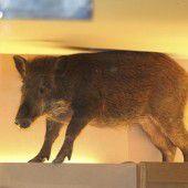 Wildschwein im Geschäft