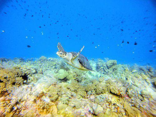 Die Meeresschildkröten sind ein beeindruckender Anblick.