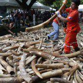 Elefantenmassaker in Tansania: Tiere in Gefahr
