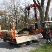 Neue Bäume für Lochauer Bodenseeufer