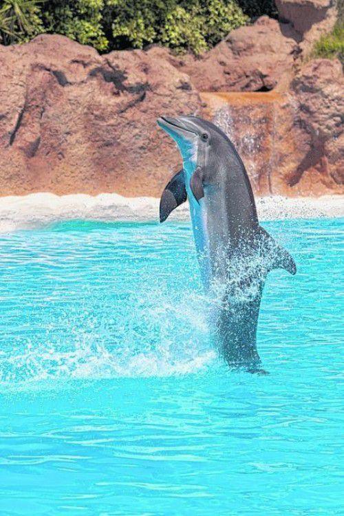 Spektakuläre Tiershows gibt's im Loro Park.