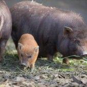 Entzückende Tierbabys erobern die Zoogehege