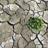 Artensterben durch den Klimawandel