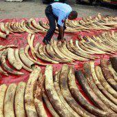 China ist Schlüssel im Kampf gegen Wilderei