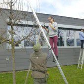 Lustenauer Schüler bauen Erholungsoase