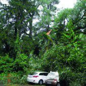 Umgeknickter Baum stürzte auf zwei Autos