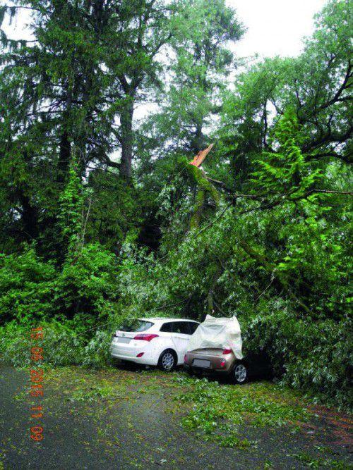 Die beiden geparkten Fahrzeuge wurden durch den umstürzenden Baum erheblich beschädigt.  Foto: Polizei