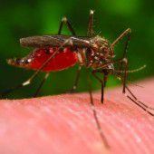 Asiatische Buschmücken im Anflug
