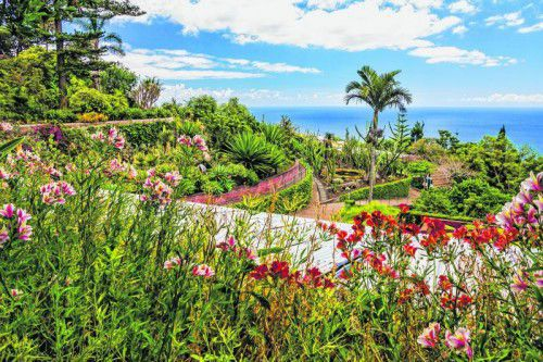 Die portugiesische Insel ist berühmt für ihre eindrucksvolle Blumenpracht. Fotos: shutterstock (7)