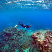 Warnung: Great Barrier Reef vor Zerstörung