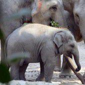 Niedliches Elefantenbaby