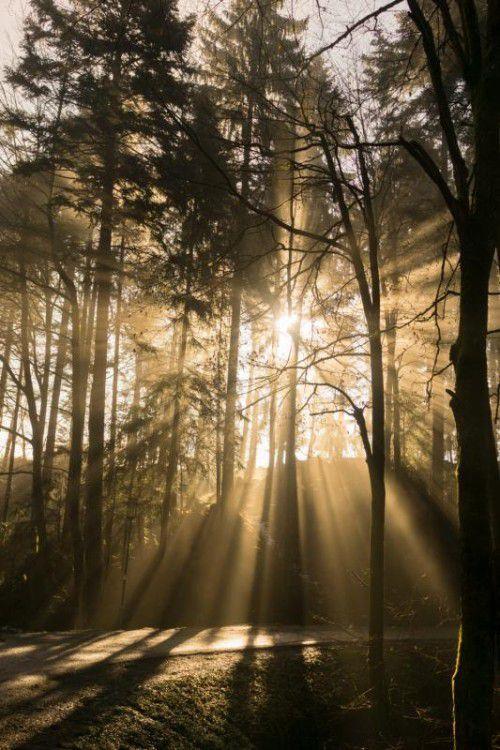 Nach 40 Jahren wäre Vorarlberg total abgeholzt. Das käme schon aus Gründen des Lawinen- und Landschaftsschutzes nicht in Frage.VN/Hartinger