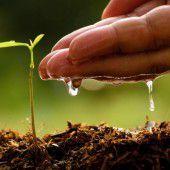 Fichten pflanzt man für die Enkel