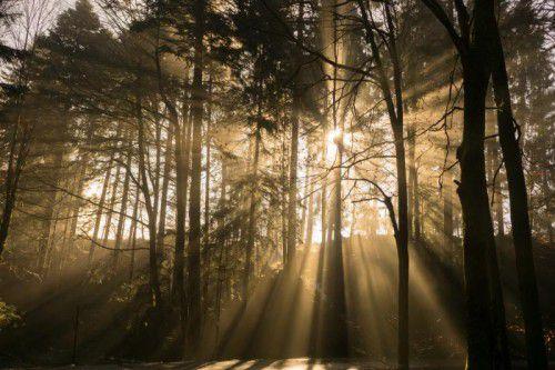 Die klimatischen Veränderungen und deren Auswirkungen auf den Wald stehen im Zentrum der diesjährigen Woche des Waldes.