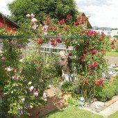 Kleines, feines Gartenparadies