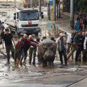 Wildtier-Alarm in Tiflis nach heftigem Unwetter