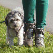 Debatte um Hundeleinenpflicht