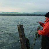 Künftig weniger Patente für die Bodenseefischer