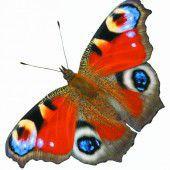 Auch die Schmetterlinge brauchen Unterstützung