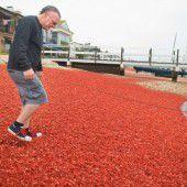 Tausende tote Krabben färben Strände orange