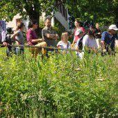 Gemeinde Rankweil lud zu Wildbienen-Exkursion