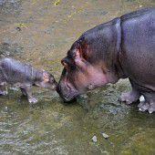 Küsschen für Mama