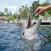 Abkühlung für Nürnberger Delfinbaby