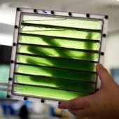 Wissenschafter wollen Algen ins All schicken