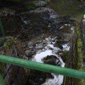 Abwasser bedroht Fische in Leiblach